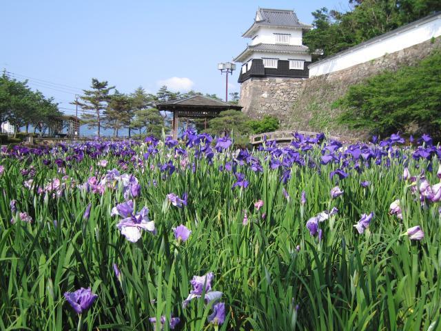 大村公園(菖蒲)