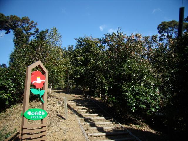 椿の群生林