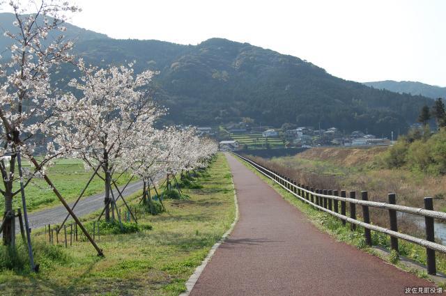桜づつみロード・田ノ頭河川公園