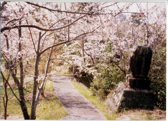維和桜・花公園