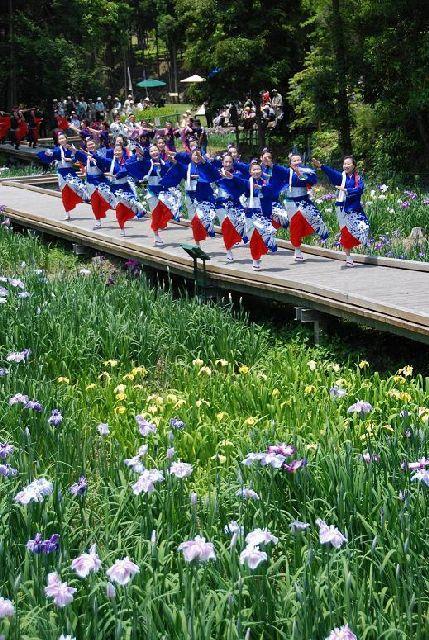 西の久保公園天草花しょうぶ祭り&食と物産大バザール