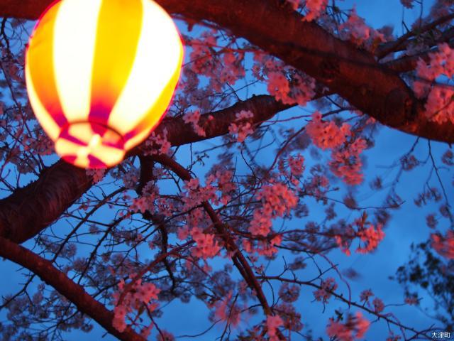 おおづ桜祭り