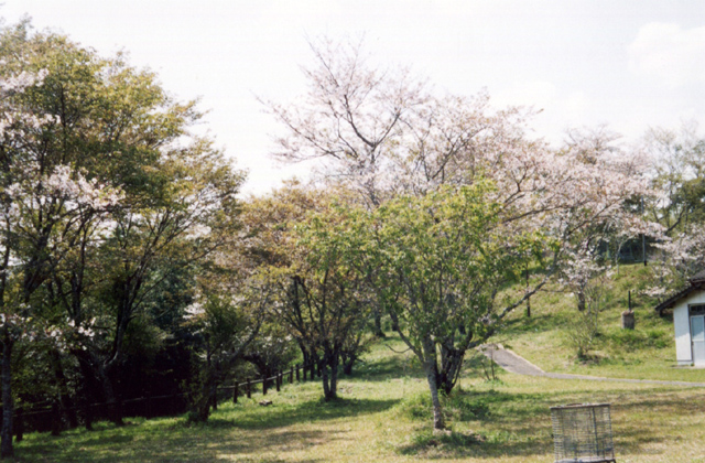 田代ヶ丘公園