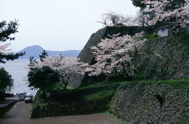 城下公園の桜