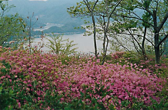 仙崎公園つつじ祭り