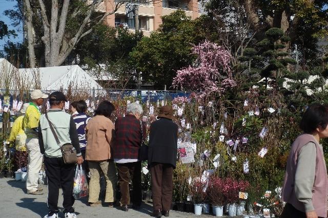 秋天nomiyazaki栽種的樹木市