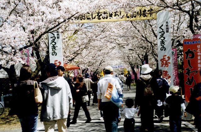 【2021年開催中止】都城もちお桜まつり