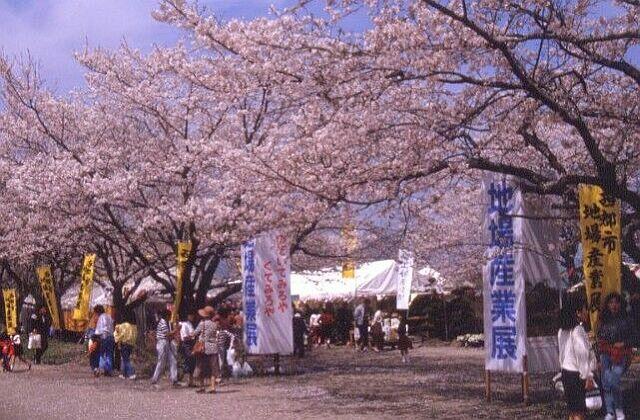 Saito Flower Festival★45208ba2210122491