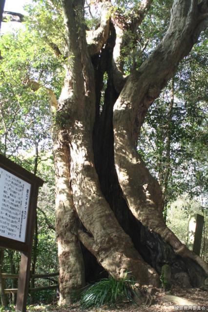 森林セラピー綾神社周辺コース
