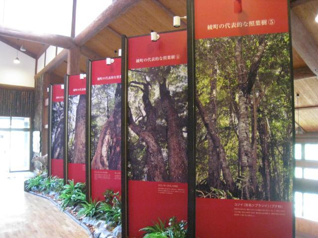 常綠闊葉林文化館