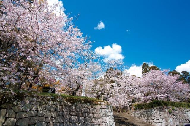 高鍋城桜まつり~桜と人と暮らふと2020~