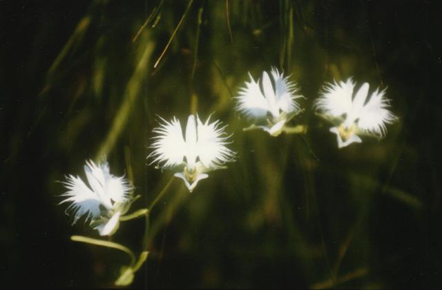 川南湿原植物群落