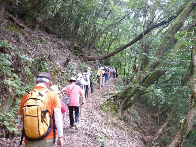 尾鈴県立公園ハイキングコース(矢研の滝)
