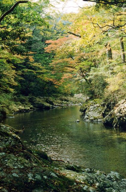 祝子川渓谷の紅葉