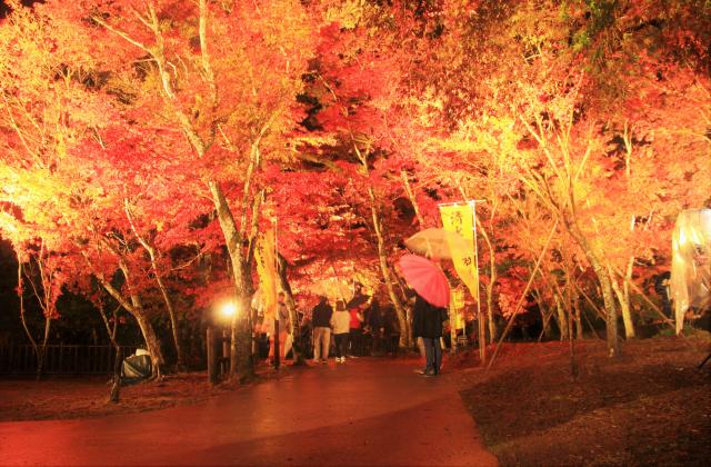 曽木の滝の紅葉