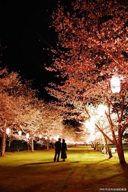 忠元公園夜桜提灯