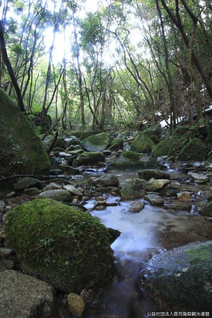 稲尾岳の照葉樹林