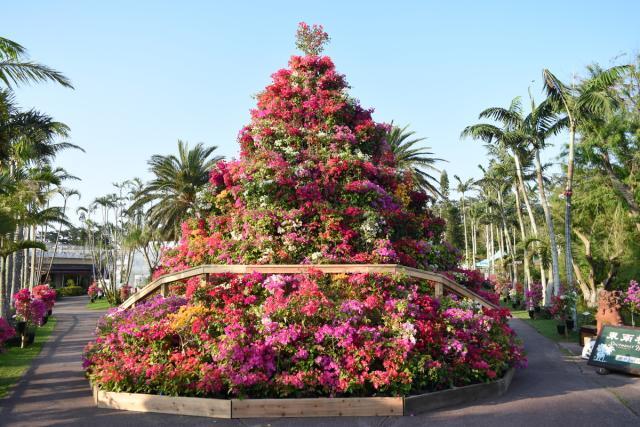 東南植物楽園 おきなわブーゲンフェア2021