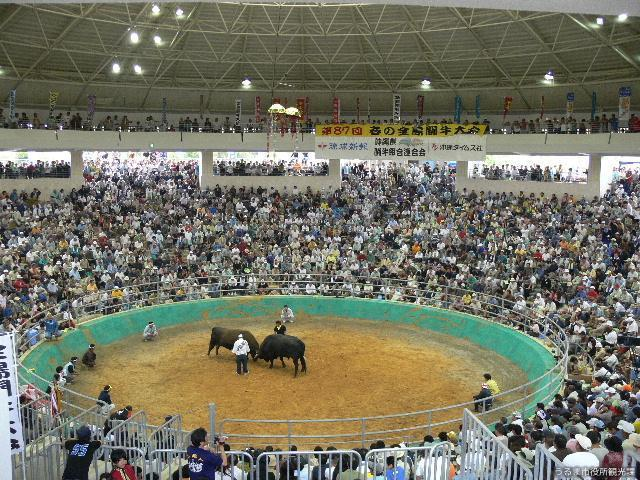 All Islands Bullfighting