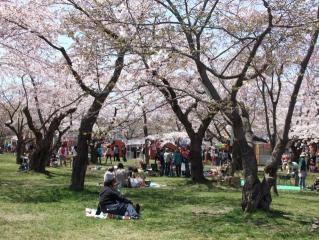 【2021年中止】もりまち桜まつり