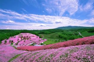 【閉園延長】芝桜まつり