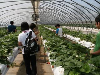 ピータン農園
