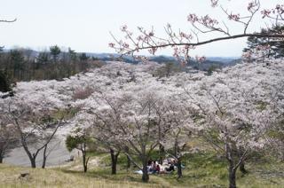 【2021年度中止】滝山桜まつり