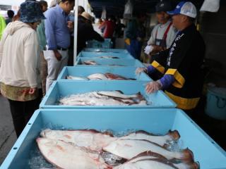【2020年中止】荒浜漁港水産まつり