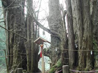 銀杏山神社の大イチョウ