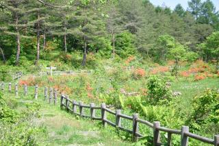 鍛冶台いこいの森ハイキングコース1