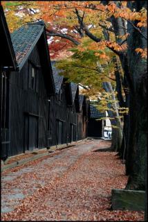 山居倉庫のケヤキ並木の紅葉