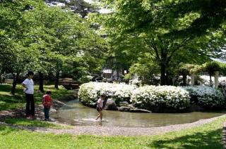 松樹ka池塘公園(白杜鵑花公園)