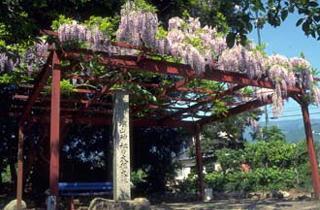 深山神社の大榧・大藤
