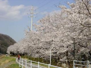 久慈川サイクリングロードから山つつじで真っ赤に染まる風呂山公園へ