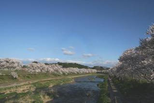 夏井千本桜遊歩道