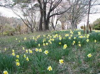 大宮自然公園(2)