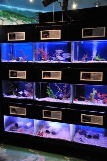淡水魚館(1)