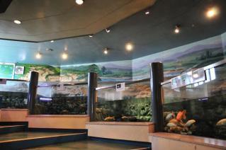 淡水魚館(2)