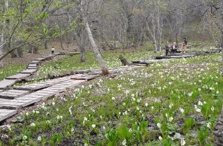 越本水芭蕉の森(自然歩道)