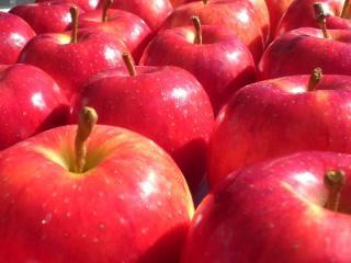 片品の 各りんご園