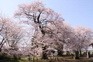長柄神社(群馬県邑楽町)