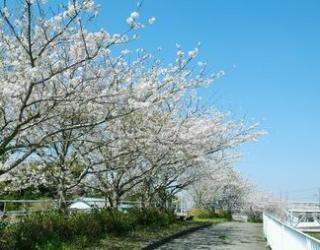 南白亀川遊歩道