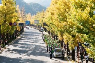 The 40th Hachioji ginkgo Festival