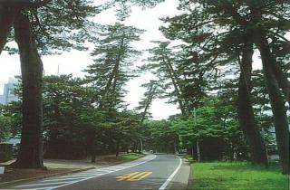 旧東海道松並木(神奈川県大磯町)