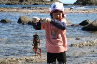 抓海岸dako旅遊