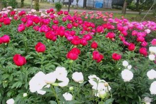 富山県薬用植物指導センター