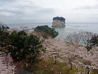 見附桜まつり