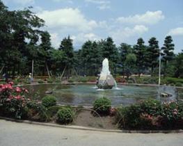 Play tortoise park