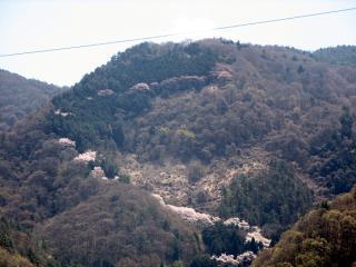 千本桜登山道 遠景