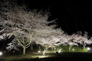 三ッ峠さくら公園の夜桜